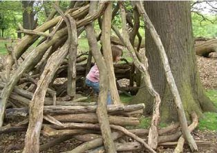 nature's hide-away within a tree